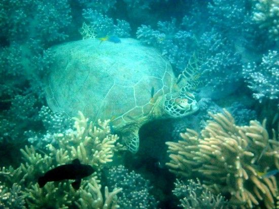 Australia Great Barrier Reef with kids