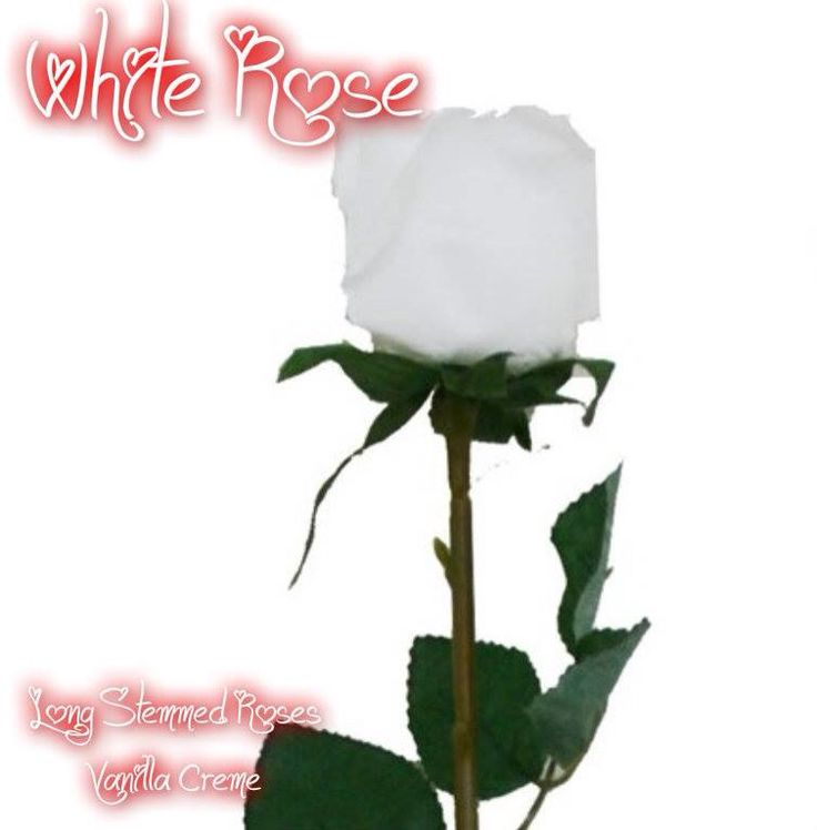 Pink Zebra Recipes- White Rose.  Featuring : Long Stemmed Roses and Vanilla Creme.