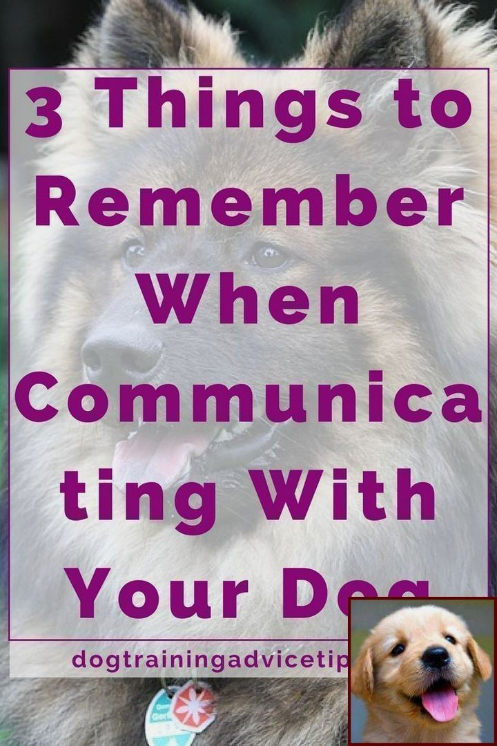 Dog Behavior Classes Near Me And Is Clicker Training For Dogs Good