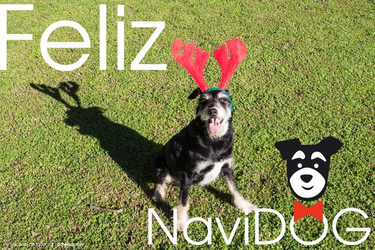 http://www.srperro.com/blog_perro/navidad-version-srperro-muy-feliz-navidog-a-todos-guau