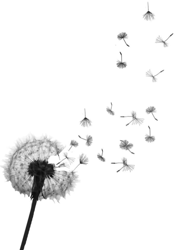 Adorable Dandelions Blowing From Puff Tattoo Design