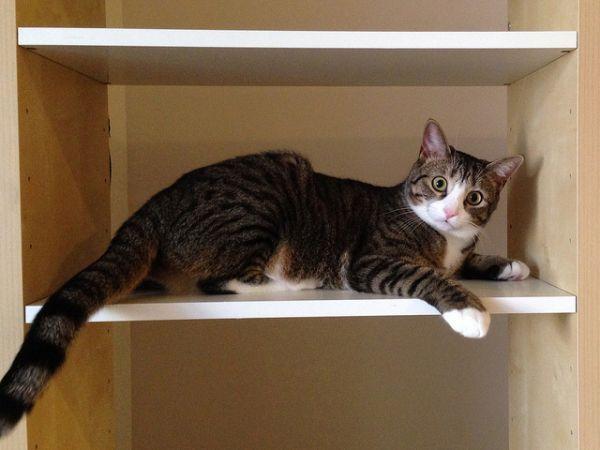 les 156 meilleures images du tableau astuces pour chiens & chats