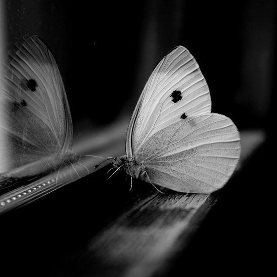 Photography by Johanna Knauer