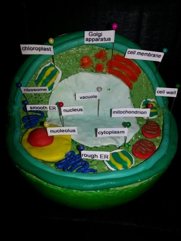 Plant Cell 3d