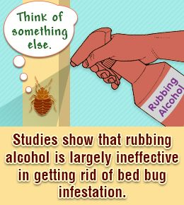 17 best ideas about killing bed bugs on pinterest what kills bed bugs bed bug remedies and. Black Bedroom Furniture Sets. Home Design Ideas