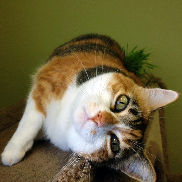 This Spunky Seven Year Old Girl Is Playful And Active And Is