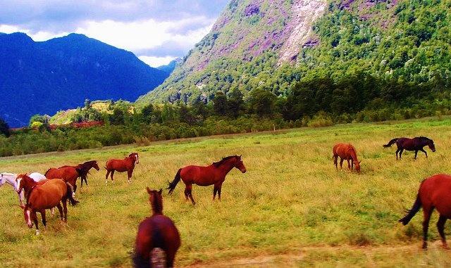 Peulla, Sur Chile