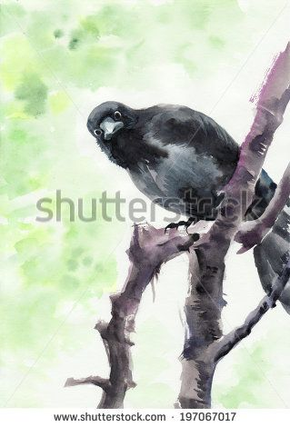 Watercolor original painting of a curious crow on a bare tree. - stock photo — — — — — — — Любопытная ворона. 2014, бумага, акварель, 30×21 — — — — — — —  Curious Crow. 2014, watercolour on paper, 30×21 cm  • • • 『カラス』、2014年、紙に水彩、30×21センチ