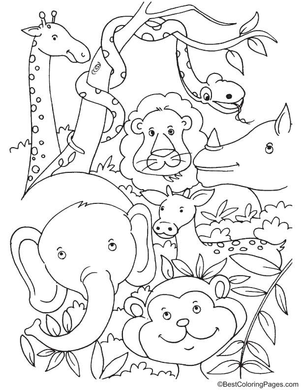 Tropical Rainforest Animals Coloring Page Animal Coloring Pages