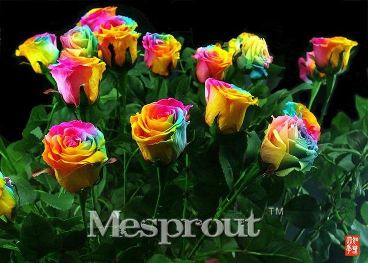 Best 25+ Rainbow roses ideas on Pinterest   Different ...