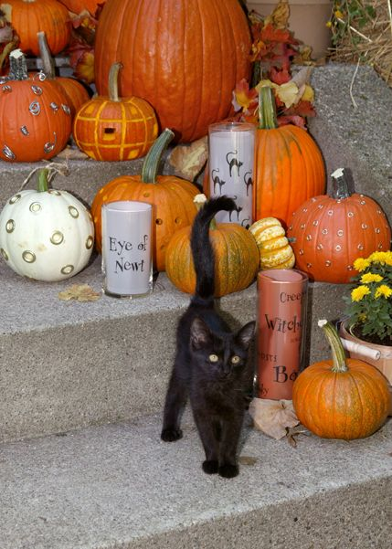 : Halloween Decor, Black Kitty, Halloween Kitty, Black Cats, Halloween Pumpkin, Cat Pumpkin, Black Cat Decor, Halloween Cat, Happy Halloween