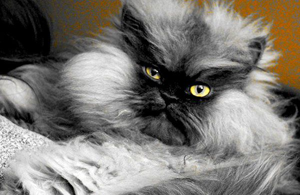 Catster Interviews Colonel Meow -- and Emerges Unscathed