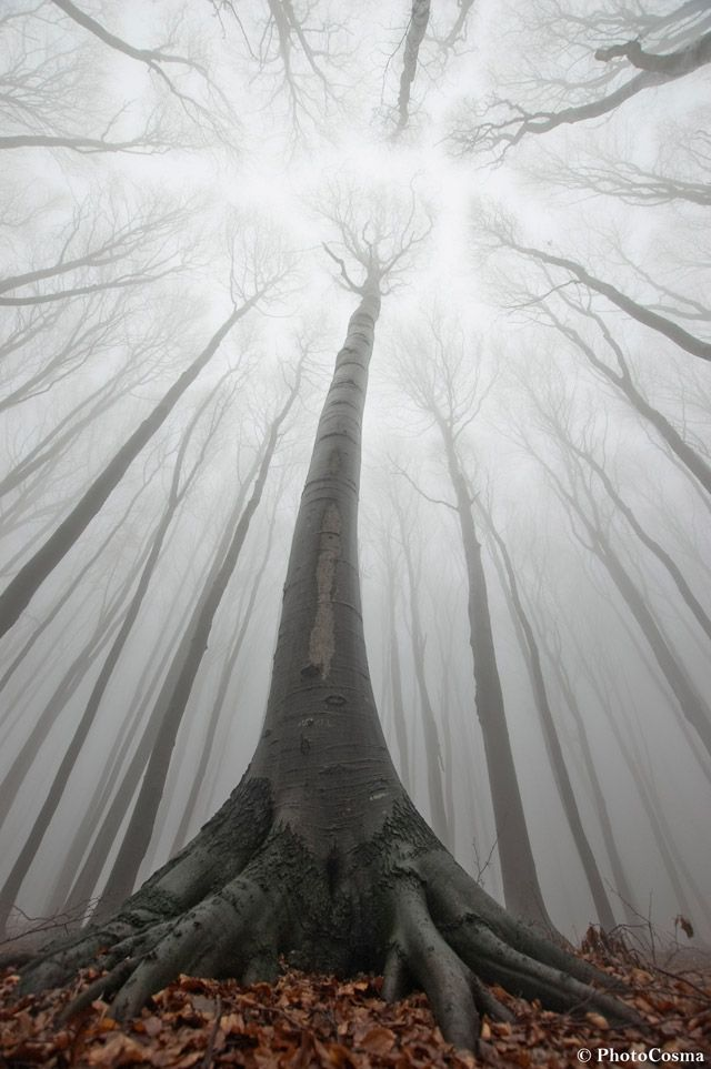 The Surreal Forests of Romania - two brothers team up to photograph etherial planes Andrei and Sergiu Cosma