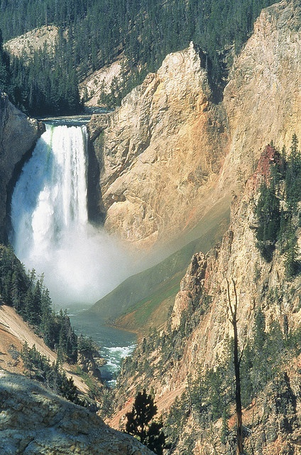 Spectacular Yellowstone Falls in the Grand Canyon of Yellowstone