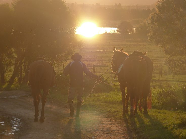 Going home after day on the trail. Horse About Trails, Cape Winelands