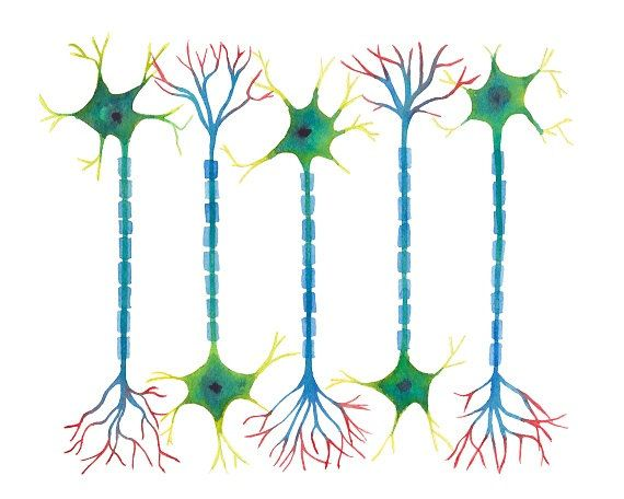 Neuron 5 neurons science art science print by sandraculliton