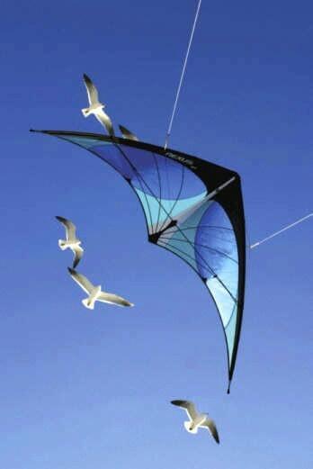 Delta bird kite flyin with the sea gulls