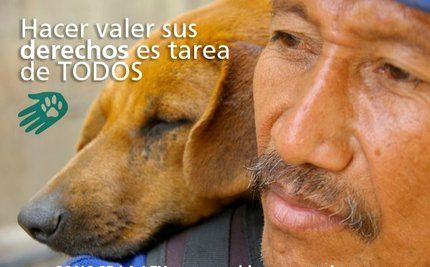 Venezuelan Rescue Team Helps Thousands of Dogs and Cats