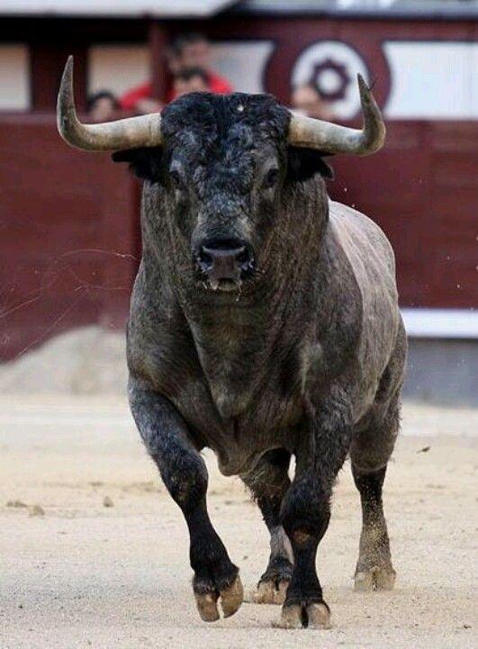 Su Majestad, el Toro http://apartmentsevilleflornaranja.blogspot.com.es/