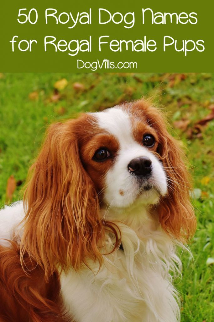 140 Royal Dog Names For Your Regal Pup Dogvills Dog Names Girl Dog Names Female Dog Names