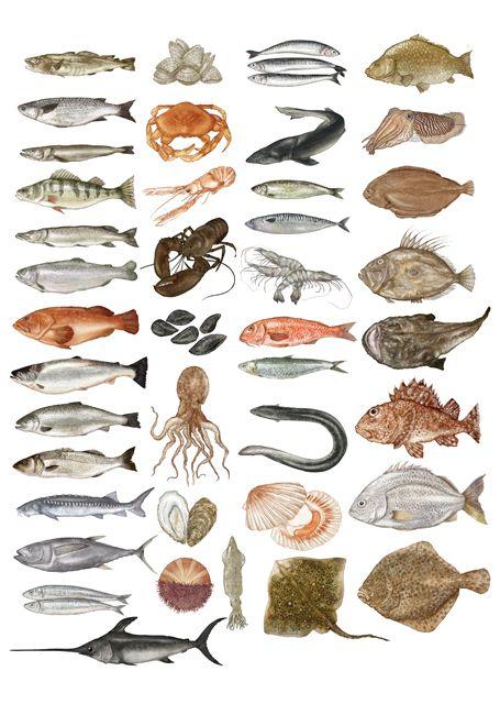721 best images about fish art on pinterest koi art for Koi larousse