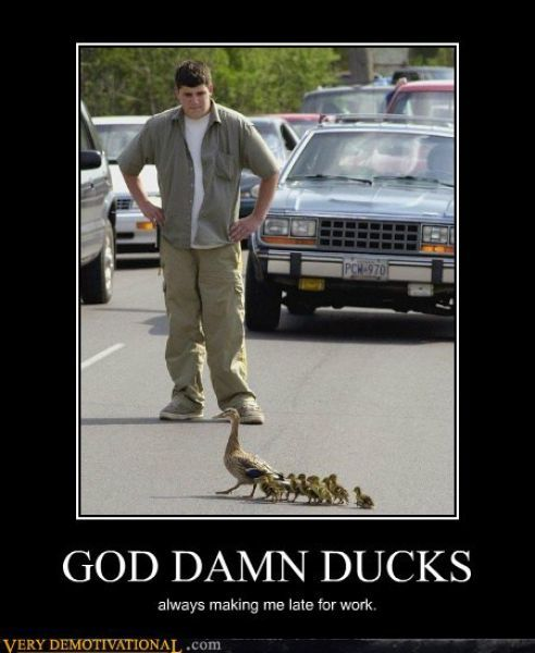 Always making me late for work: The Roads, Damn Ducks, Baby Ducks, Demotivational Posters, Funny Stuff, A Real Men, Crosses, Birds, Animal