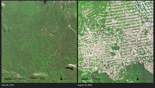 19.) Deforestation - Brazil
