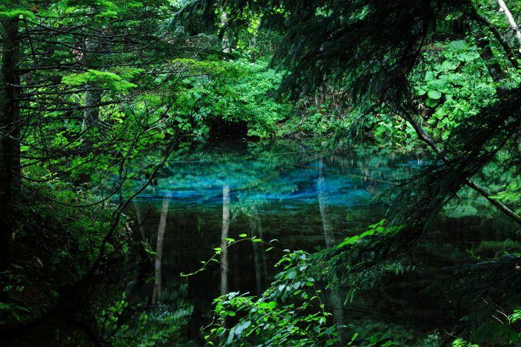 深緑に湧く蒼き水