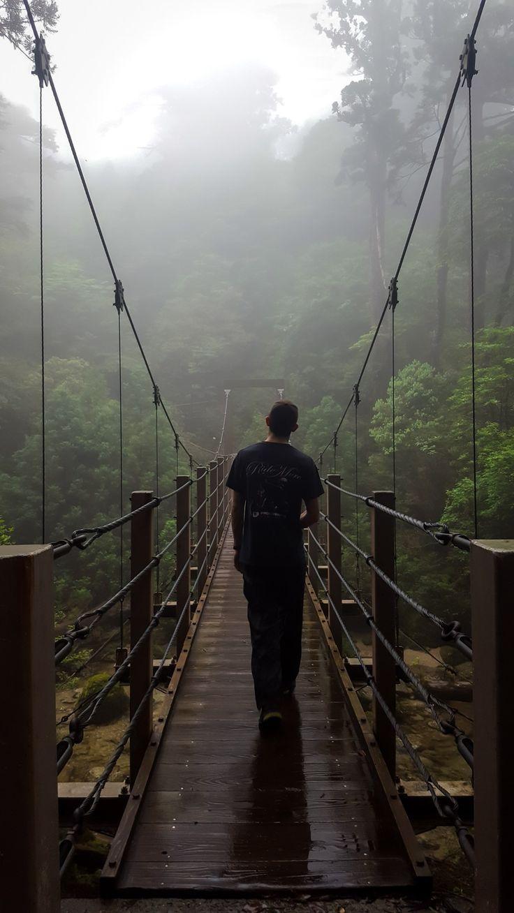 Footbridge Misty Yakushima Forest