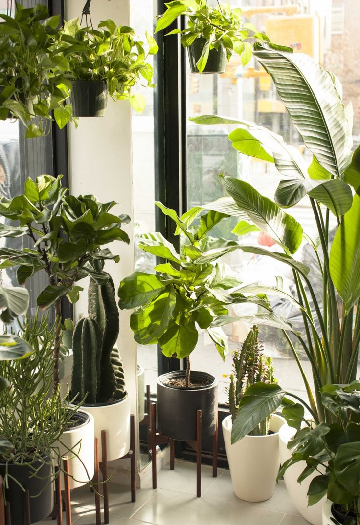 The Sill wants to bring keeping plants alive to everyone (plus clients like Google, Twitter, and Warby Parker): The plant brand, with a storefront in Manhattan, is nothing short of immaculate, and so flush with greenery you could almost forget you're in Chinatown. | Coveteur.com