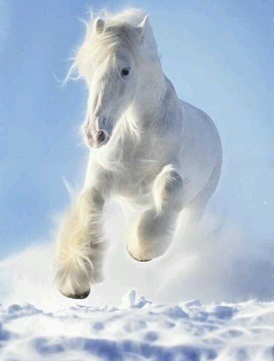 ♂ wild life photography white Horses