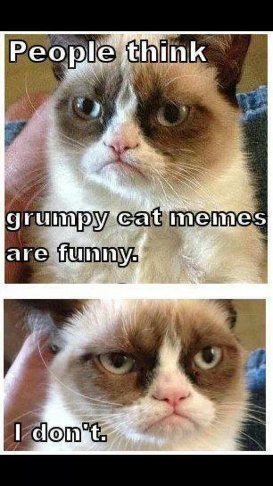 825 best grumpy cat images on pinterest