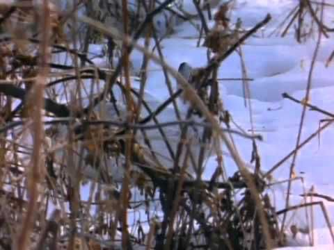 where do animals go in winter? - YouTube, 17:27, pretty simple language, calming music and voice