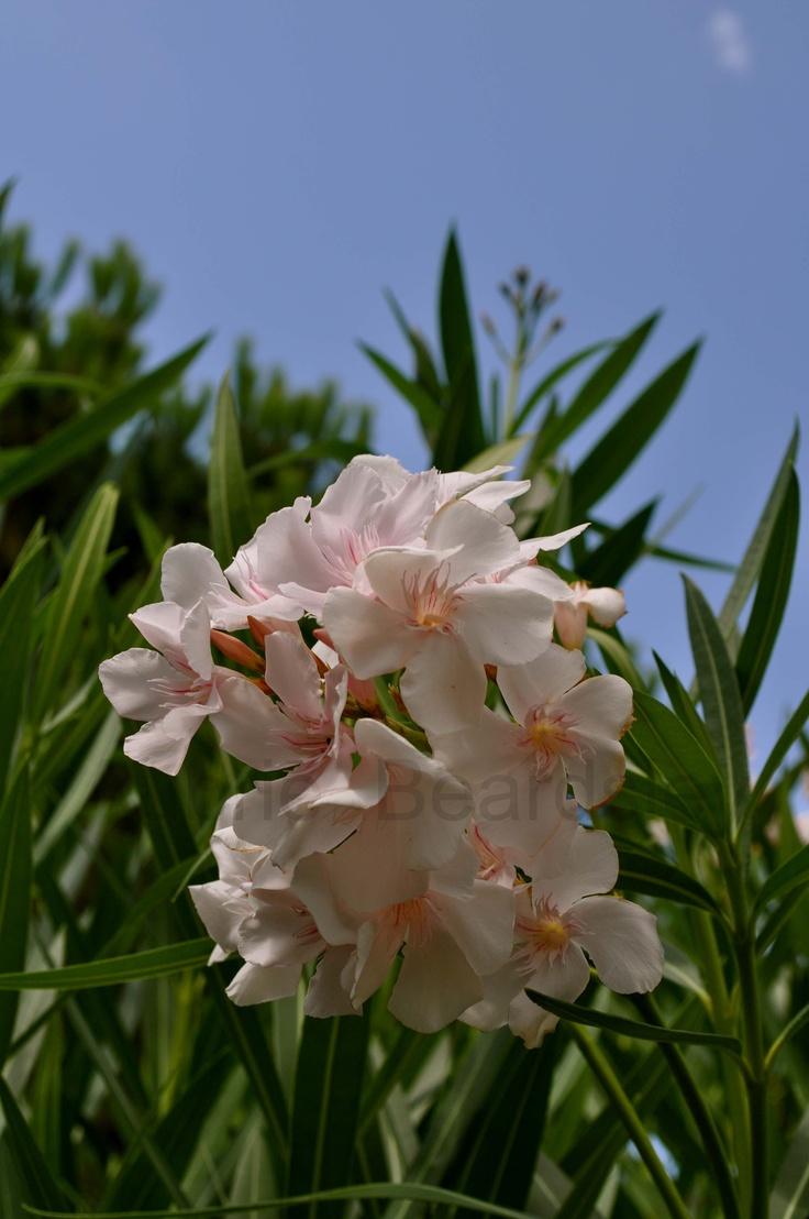 Flowers In Sellia Marina Calabria Italy Flowers
