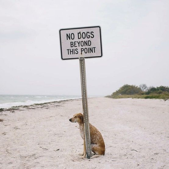 no dogs beyond this point by this wild idea