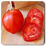 Organic Amish Paste Tomato