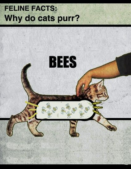 Bees, Cat Purr, Meow, Funny, Feline Facts, Cat Facts, Kitty, True Stories, Cat Lady