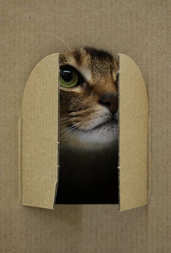 Window cat 6950 by y_and_r_d, via Flickr