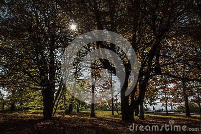 Beautiful autumn view in park , sunlight backgrounds.