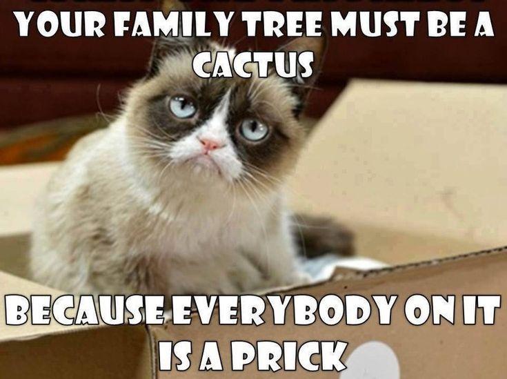 Image result for cat memes