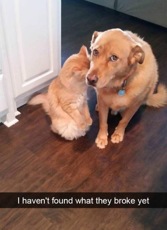 Funny dog meme pictures