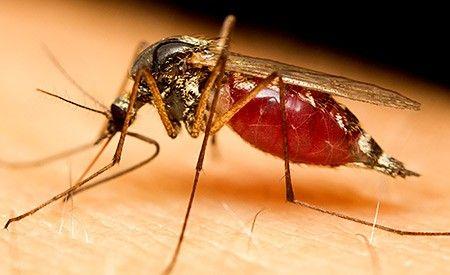 Natürliche Mittel gegen Mückenstiche