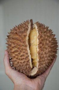 Le durian (Philippines). Puanteur d'un fruit qui peut tuer