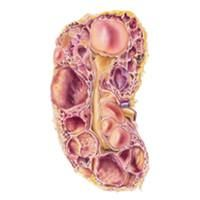 Kidney cysts are quite common, especially in people over the age of 50. Kidney cysts can be benign with no symptoms at all and may go unnoticed, or they can be complex and potentially troublesome or cancerous.
