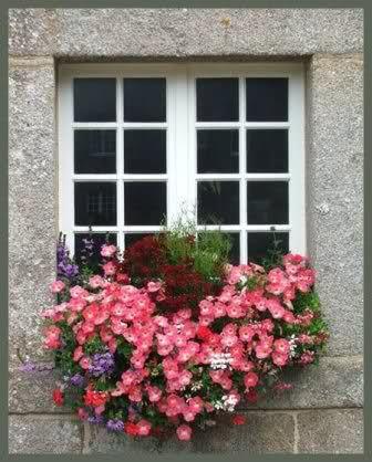 10 ideas about fioriere su pinterest fioriere da - Gardenia pianta da interno o esterno ...
