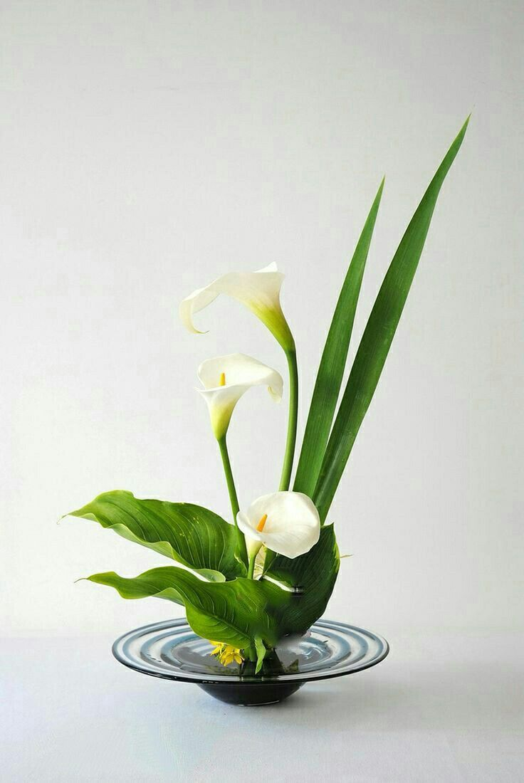 156 best white calla lily images on pinterest calla lily art floral floral design flower arrangement floral arrangements ikebana calla lily flowers flower arrangements dhlflorist Images