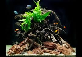 AQUARIUM SUPPLIES, ACCESSORIES AND EQUIPMENT: Setting Up Your Aquarium in a Cheaper Way