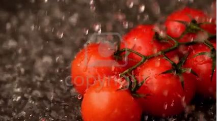 Stock Footage: Water raining on cherry tomatoes in slow motion | ID:28660404 @ 123rf.com #stockfootage #stockvideo