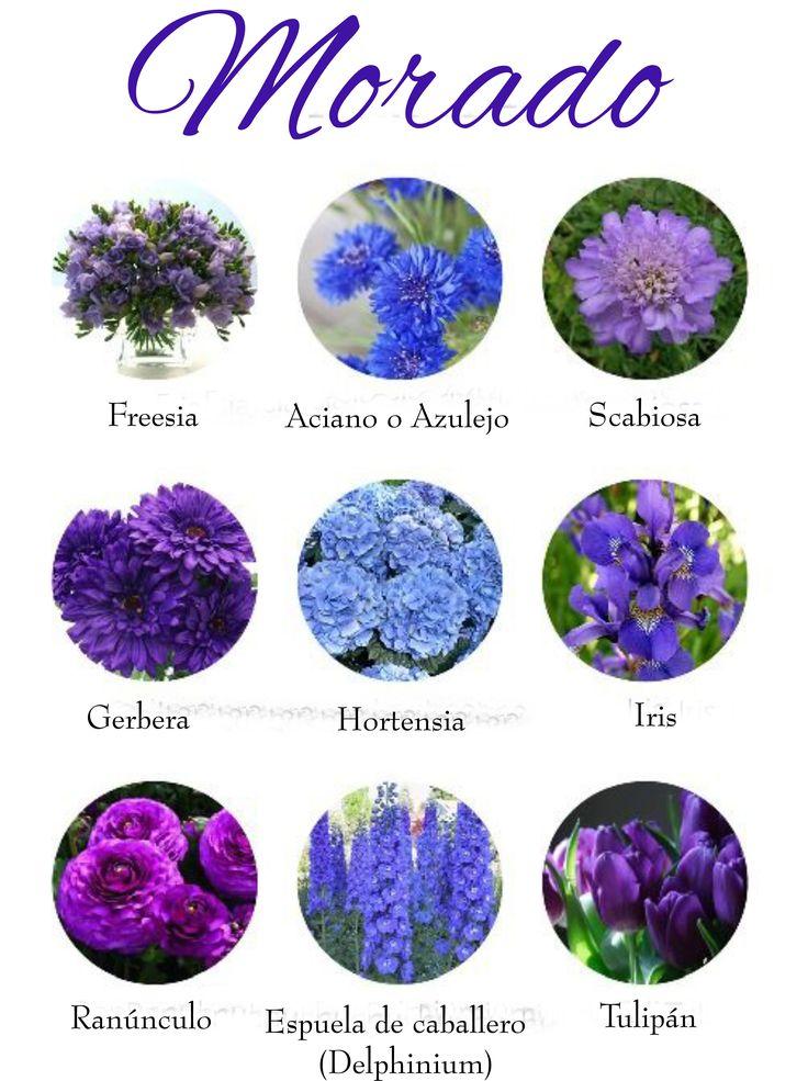 Flores de color morado. Purple flowers.
