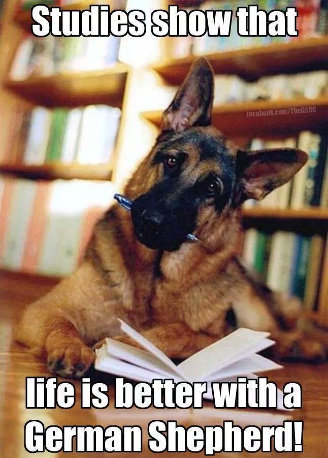 It's true! See? --> https://www.animalhub.com/pets-improve-health